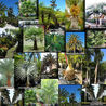 Hire pro landscape designer in Merritt Island, FL. Call Tropical Island Nursery