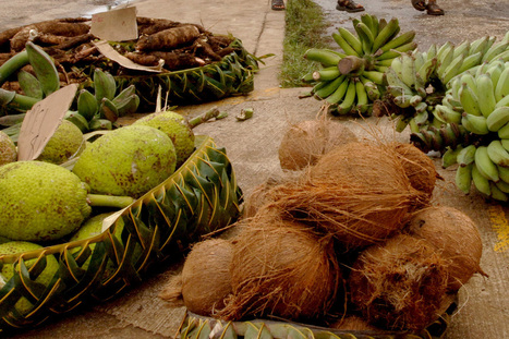 Coconut drives Tonga's cyclone recovery | Geography 200 | Scoop.it