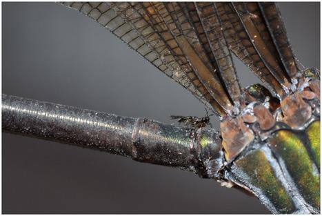 Une nouvelle espèce de guêpe découverte par des scientifiques taiwanais | EntomoNews | Scoop.it