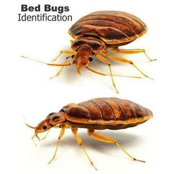How To Get Rid Of Booklice Pest Control Sc
