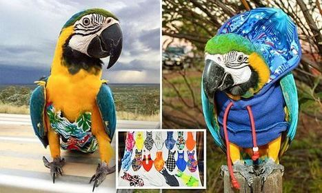 Parrot is the most fashionable bird on the block | Food for Pets | Scoop.it