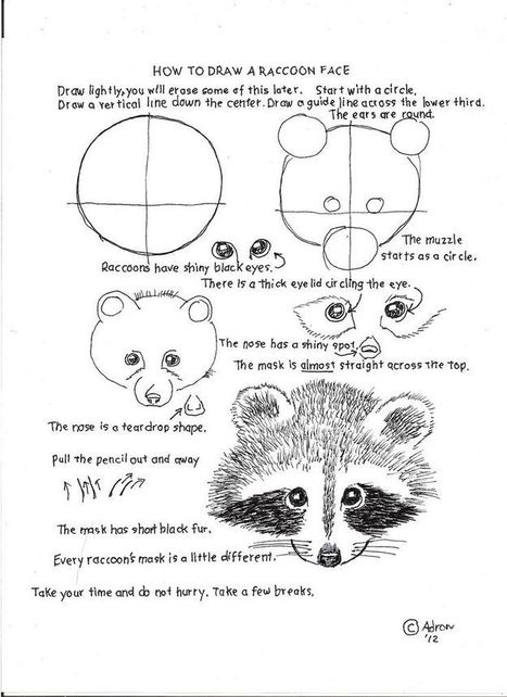 Animal Drawing In Drawing And Painting Tutorials