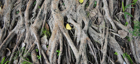 The Importance of Staying True to Your Roots as an Entrepreneur | Competitive Edge | Scoop.it