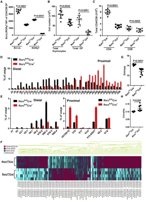 Inhibition of RORγT Skews TCRα Gene Rearrangement and Limits T Cell Repertoire Diversity | Immunology | Scoop.it