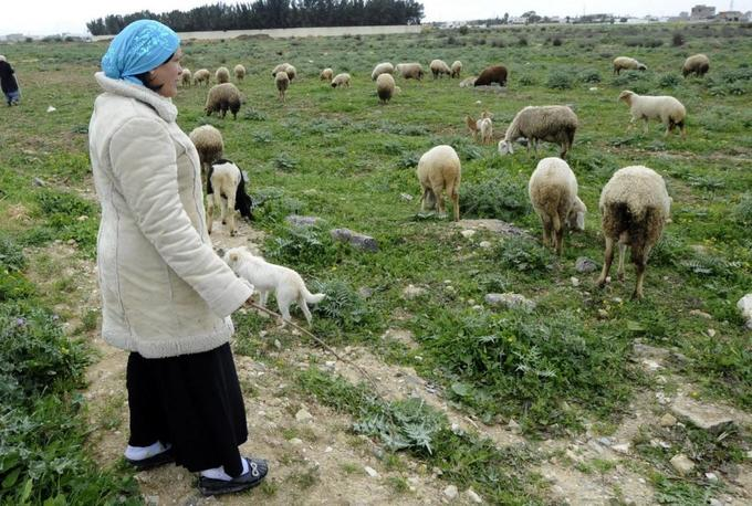 'The last days of agriculture': Squeezed Tunisian farmers eye EU imports with concern