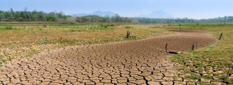 COP 22: un petit pas vers la prise en compte de l'eau | CIHEAM Press Review | Scoop.it