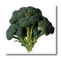 Plant Broccoli Transplants | School Gardening Resources | Scoop.it