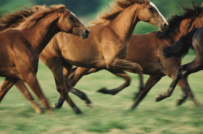 feng shui art for office. Five Reasons Entrepreneurs Would Benefit From Equestrian Art In Their Office Decor Feng Shui For
