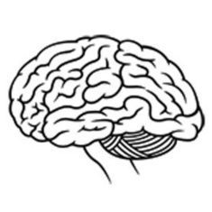 How does our brain learn new information?: Scientific American | UDL & ICT in education | Scoop.it