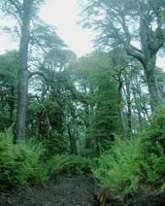 L'exemple de la forêt - Assolement et semis direct | Communiqu'Ethique sur la santé et celle de la planette | Scoop.it