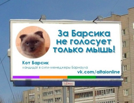 Russia: Cat is more popular than mayoral candidates in Siberian town of Barnaul | No Such Thing As The News | Scoop.it