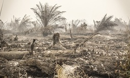 Setting a country alight: Indonesia's devastating forest fires are manmade | Geography in the classroom | Scoop.it