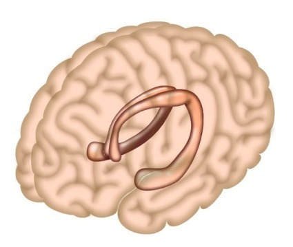 Memory and the hippocampus | Cognitive Psychology. Cognitive and behavioural Neuroscience | Scoop.it