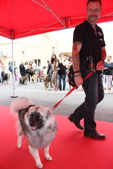 Top Animal a organisé l'élection du plus beau chien du 04 | CaniCatNews-actualité | Scoop.it