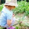 Huertos escolares ecológicos