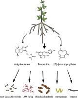 Engineering the plant rhizosphere | Microbes | Scoop.it
