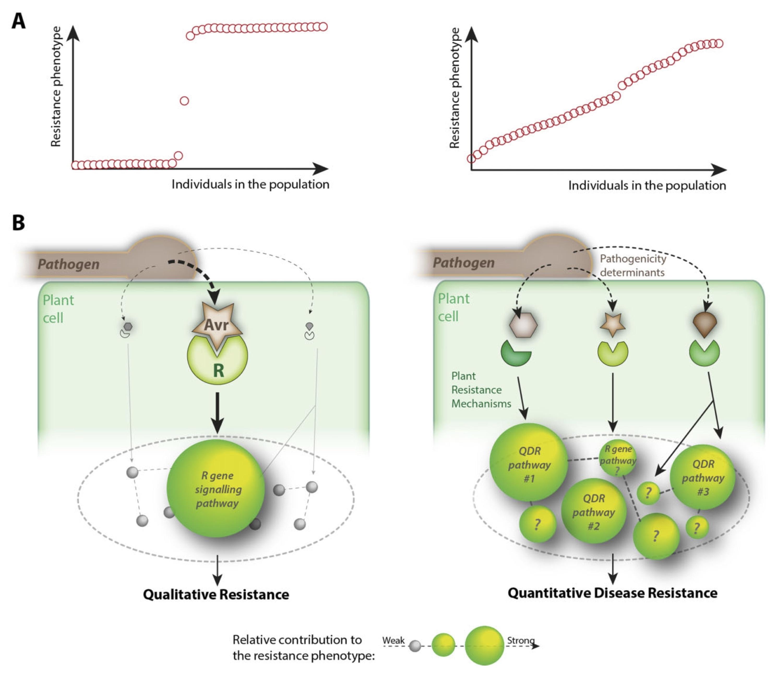 Molecular Plant Pathology: Resistance to p