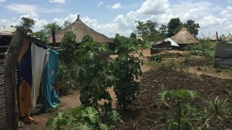 «Refugees welcome» – Uganda schafft das | Afrika | Scoop.it