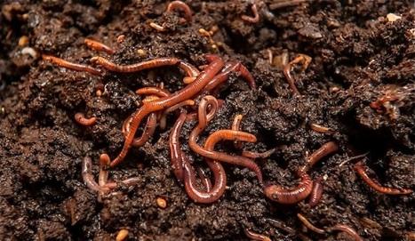 El zoológico subterráneo: un aliado en la sustentabilidad de los suelos | ECOSALUD | Scoop.it