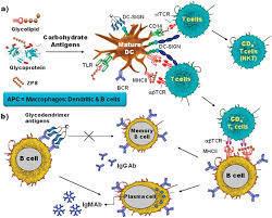 Siamab Therapeutics target tumor ass