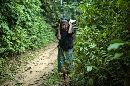 Forests and food security: back on the global agenda | Climate Change Adaptation in Southeast Asia | Scoop.it
