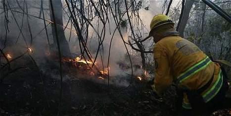 Incendios por fenómeno de El Niño arrasaron 120.000 hectáreas en 2015 - Ciencia - El Tiempo   Actualidad colombiana   Scoop.it