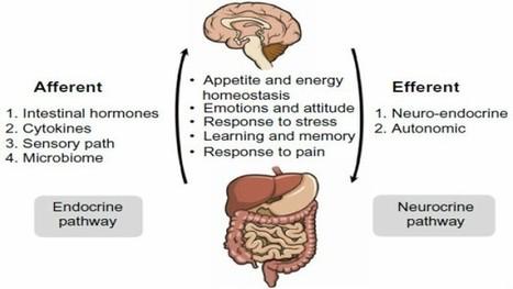 β2-Adrenergic Receptor Activation Promotes M2 Polarization of Gut Macrophages: How the Brain–Gut Axis Maintains Tissue Homeostasis | BrainImmune: Trends in Neuroendocrine Immunology | Neuro-Immune Regulatory Pathways | Scoop.it