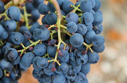 In California: Another decade, another wine boom   Vitabella Wine Daily Gossip   Scoop.it