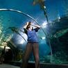 www.chf-aquaculture.com