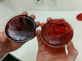 Anna Dumitriu: Confronting the Bacterial Sublime: Whole Genome Sequencing, Microbiology and Bioart | MutaMorphosis: Tribute to Uncertainty | Art & Science | Scoop.it