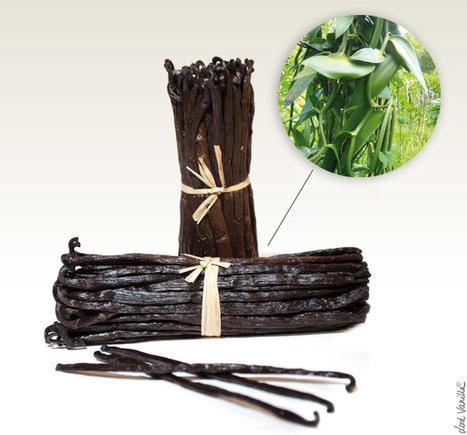Lord Vanilla - Importation de Vanille Bourbon de Madagascar | Gastronomie et alimentation pour la santé | Scoop.it