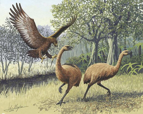 Haast's Eagle Was Big & Strong Enough to Prey on Humans | Amazing Science | Scoop.it