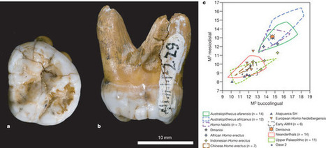 Genetic history of an archaic hominin group from Denisova Cave in Siberia : Nature : Nature Publishing Group | Archaeology Articles and Books | Scoop.it
