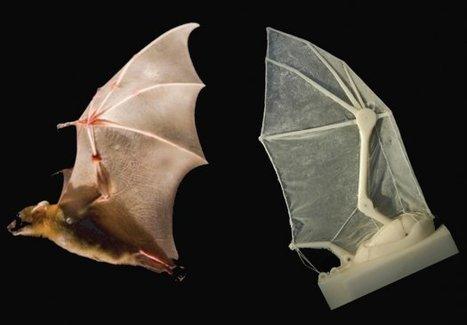 Flapping Robotic Wing Helps Biologists Uncover Secrets Of Bat Flight | Aerospace Innovation & Technology | Scoop.it