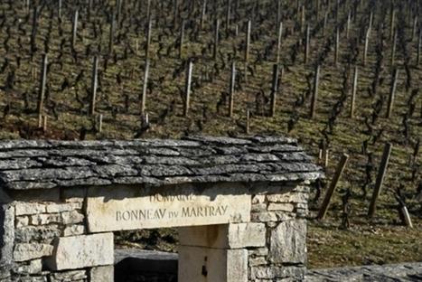 Bourgogne: un milliardaire fait flamber le prix des vignes | Le vin quotidien | Scoop.it