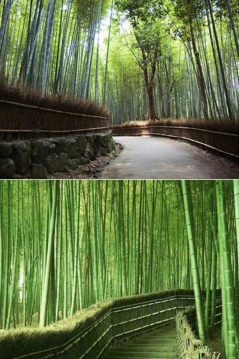 Bamboo Gardendesign Gardenideas Gardeningtips Gar In 1001 Gardens