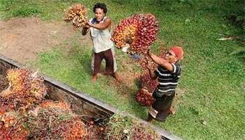 Olam Palm Gabon lève 228 millions de dollars | L'économie africaine sous toutes ses coutures | Scoop.it