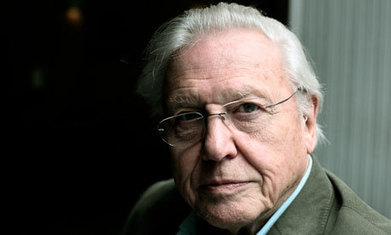 Badger cull: Attenborough condemns UK government for 'ignoring' science - The Guardian | Environmental Education & Wildlife Conservation | Scoop.it