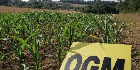 OGM : le Parlement interdit définitivement la culture du maïs transgénique en France   Agriculture en Dordogne   Scoop.it