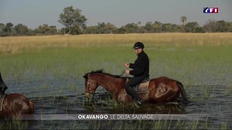 Le Journal du week-end - À la découverte du delta de l'Okavango, au Botswana | Cheval et Nature | Scoop.it