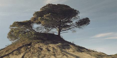 Mind-Bending GIFs Push the Limits of the Format | Raw File | WIRED | Digital Fuel | Scoop.it