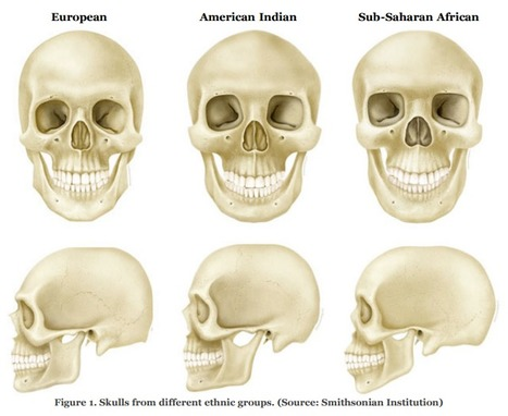 Forensic Anthropology Scoop It