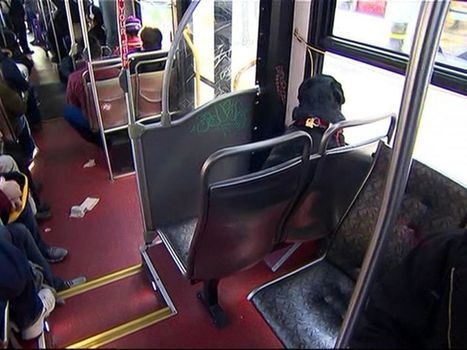 Meet the Canine Commuter Who Takes the Bus on Her Own | Natural Fears | Scoop.it