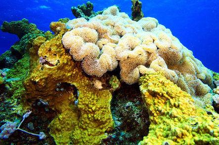 Fading corals of Africa's coasts | Scuba Diving Adventures | Scoop.it