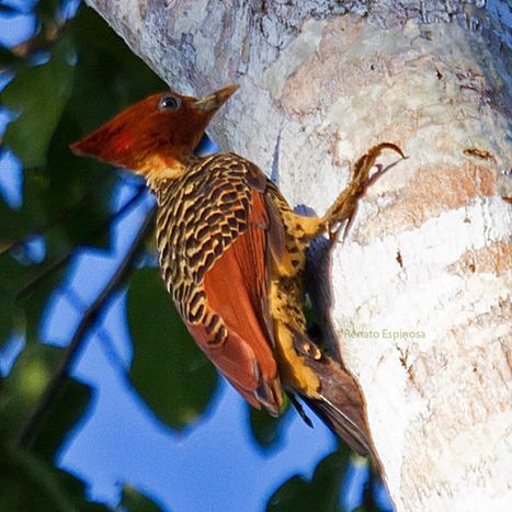 Sani Lodge Birdwatching - 10000 Birds | Birds and Birding | Scoop.it