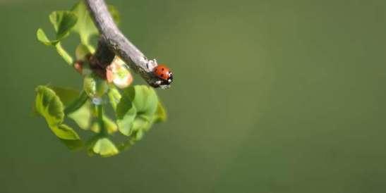 «La lutte contre l'érosion de la biodiversité doit être une priorité internationale»