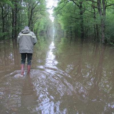 Ne pas se rendre dans les forêts inondées ces derniers jours - Tribune Libre de Bleau et Cie   Les colocs du jardin   Scoop.it