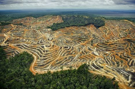 NO TO BIODIVERSITY CARBON OFFSETTING: Conserving Our Natural World is Becoming Dependent On Its Destruction | Biodiversity IS Life  – #Conservation #Ecosystems #Wildlife #Rivers #Forests #Environment | Scoop.it