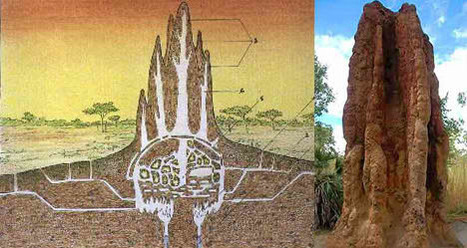 Sustainable Building in Zimbabwe Modeled After Termite Mounds | What Surrounds You | Scoop.it
