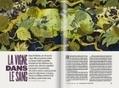 La vigne qui tue - France Info | Le vin quotidien | Scoop.it